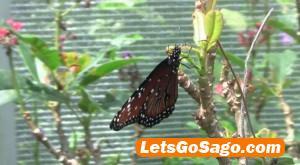 butterfly garden subic