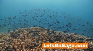 dakak diving